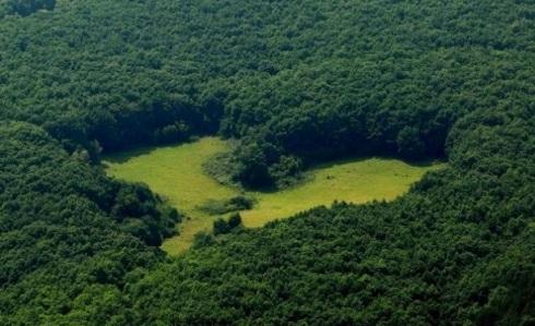 Heart-shaped-oak-forest-glade