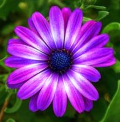 9a6d25f68ed532413109dd86f34913f1--flower-photos-purple-flowers (1)
