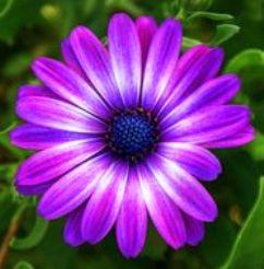 9a6d25f68ed532413109dd86f34913f1--flower-photos-purple-flowers (1)