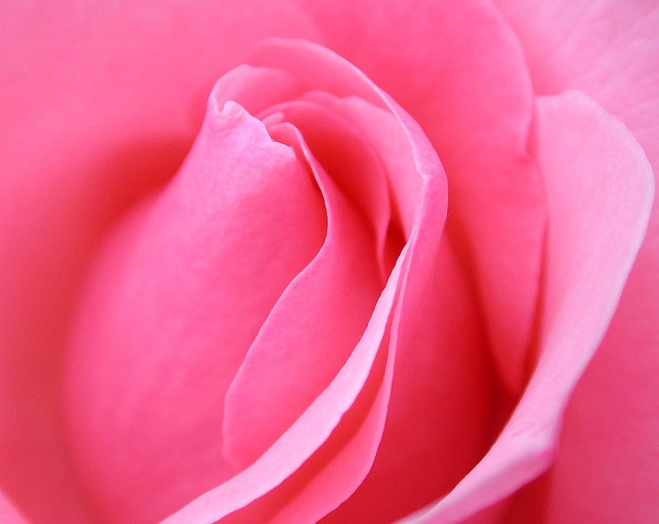 Pink Flowers Meaning 9 Hd Wallpaper Lovelight Meditation Circle