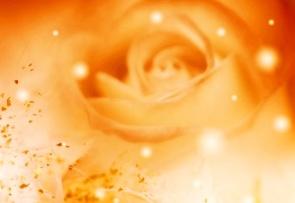 roses_magic_7-t2