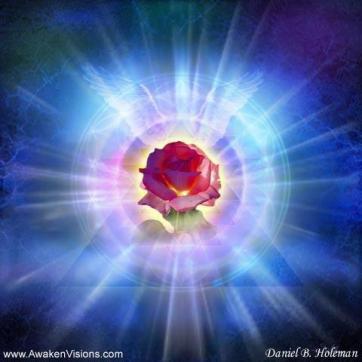 divine-heart-rose
