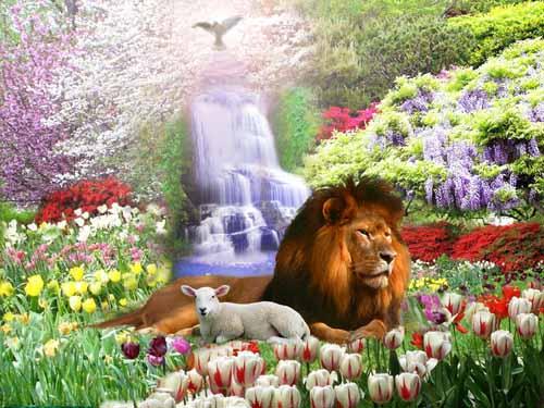 lamb&lion waterfall