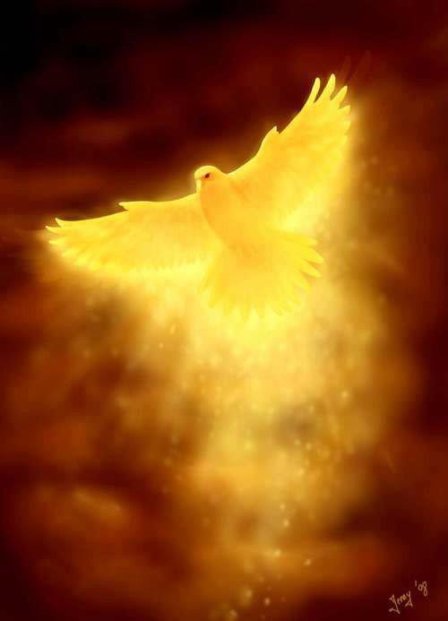 Dove of Gold Light