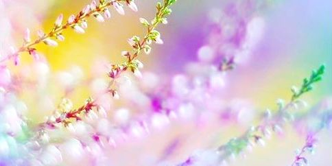 9cae781ebd304569fd6c35c1d92b27da--pastel-flowers-pastel-colors - Copy