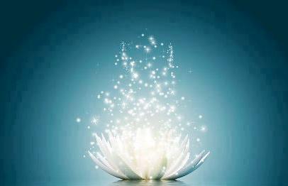 white lily pure magic - Copy (2)