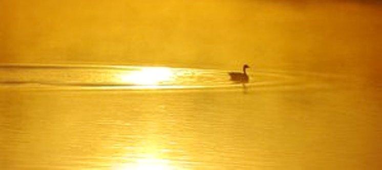 On_Golden_Pond_2_by_Grunvald -