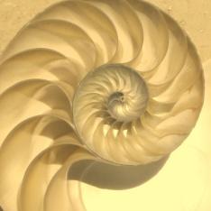nautiluscutawaylogarithmicspiral-copy